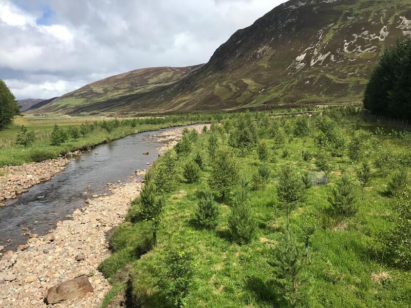 River Dee Trust - lower Gairn tree planting (2)